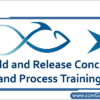 build-and-release-concept-and-process-training